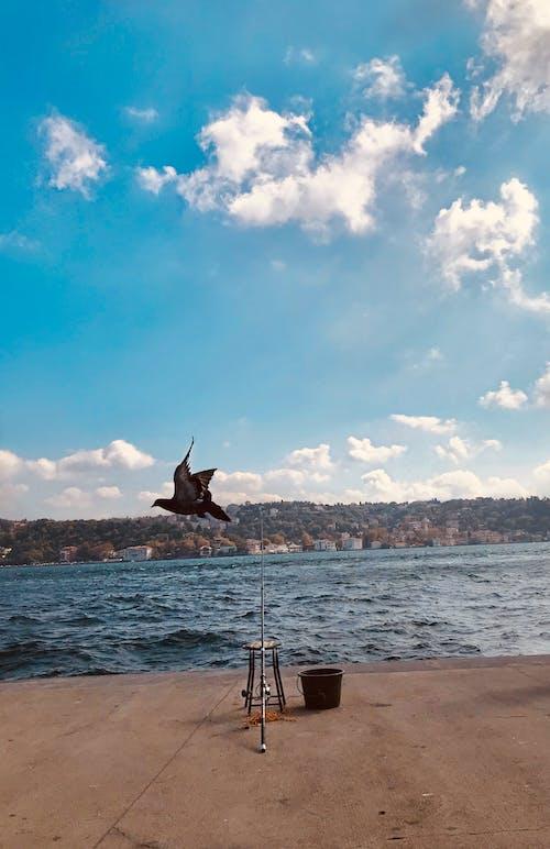 # boğaz, # türkiye, #fotoğraf, #i̇stanbul içeren Ücretsiz stok fotoğraf