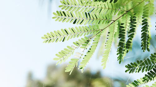 Darmowe zdjęcie z galerii z liść palmy, liście, łodyga, orlica