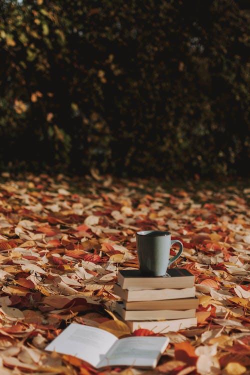 Gratis arkivbilde med årstid, blader, bøker, dagslys