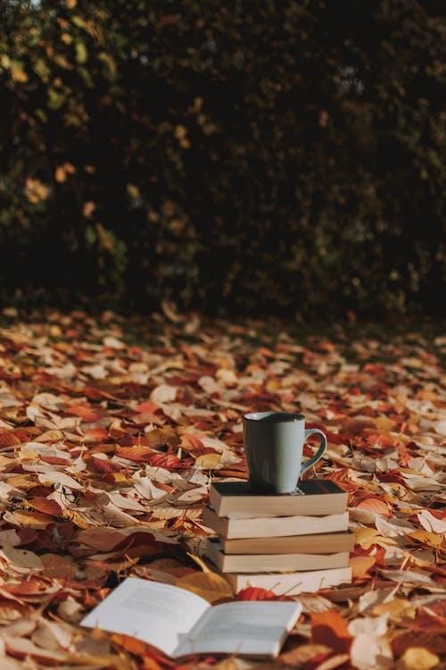 arbre, art, automne