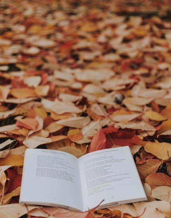 Book on Brown Leaves