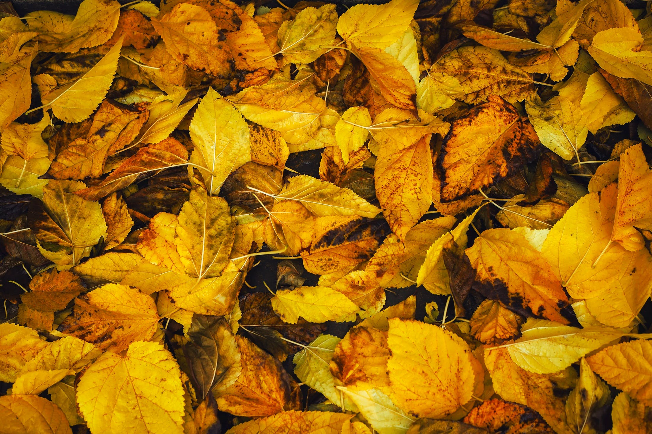 Free stock photo of autumn, background, colorful, colors