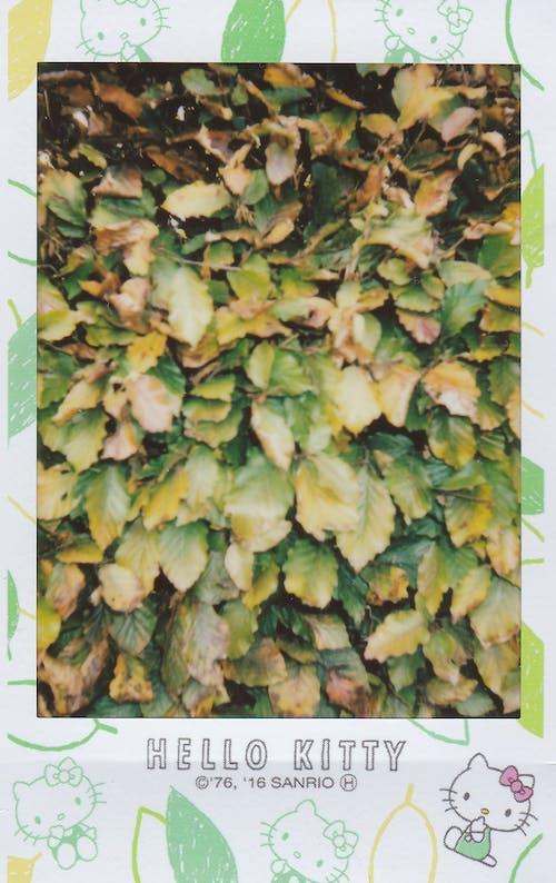 Immagine gratuita di albero, ciao kitty, colore, crescita