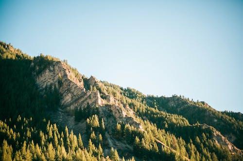 Ingyenes stockfotó fa, fák, fenyőfák, hegy témában