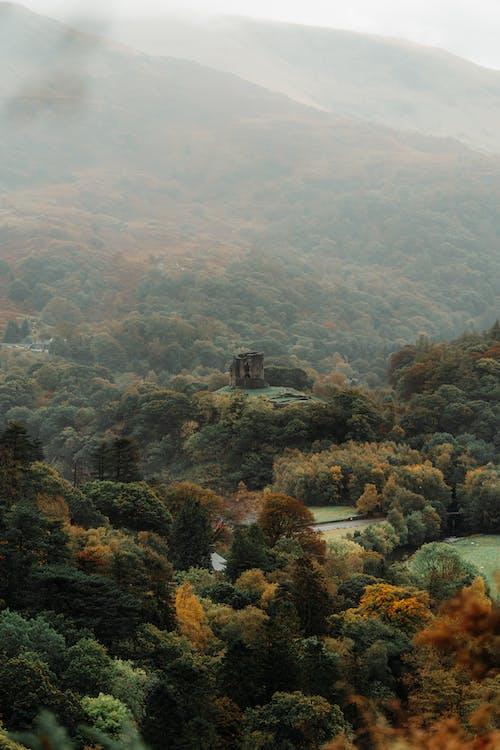 Fotos de stock gratuitas de agua, bosque, composición, creativo