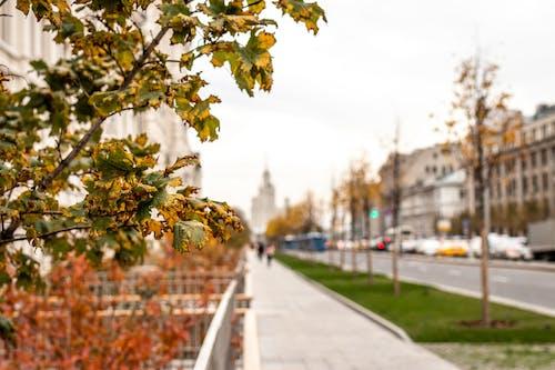 Foto profissional grátis de ao ar livre, arquitetura, árvores, casas