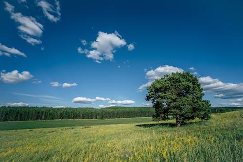 Photos gratuites de arbre, clairière, dehors, été