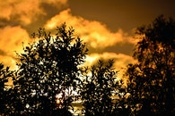 sun, bush, shrub