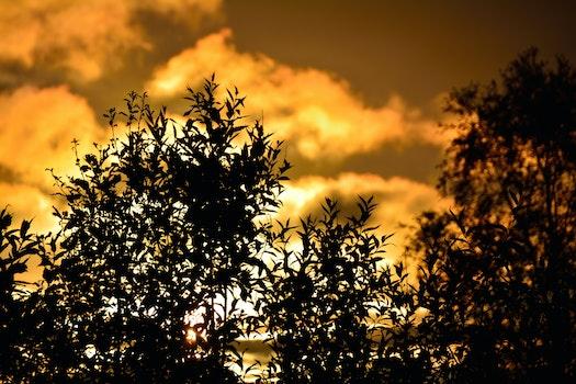 Free stock photo of sun, bush, shrub