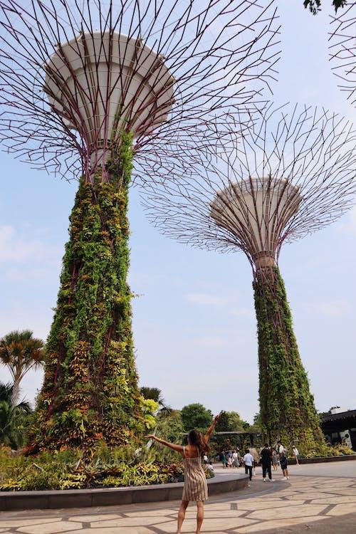 公園, 地標, 城市, 增長 的 免费素材照片