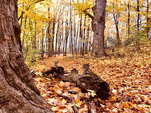 Free stock photo of autumn mood forest, forest, trees