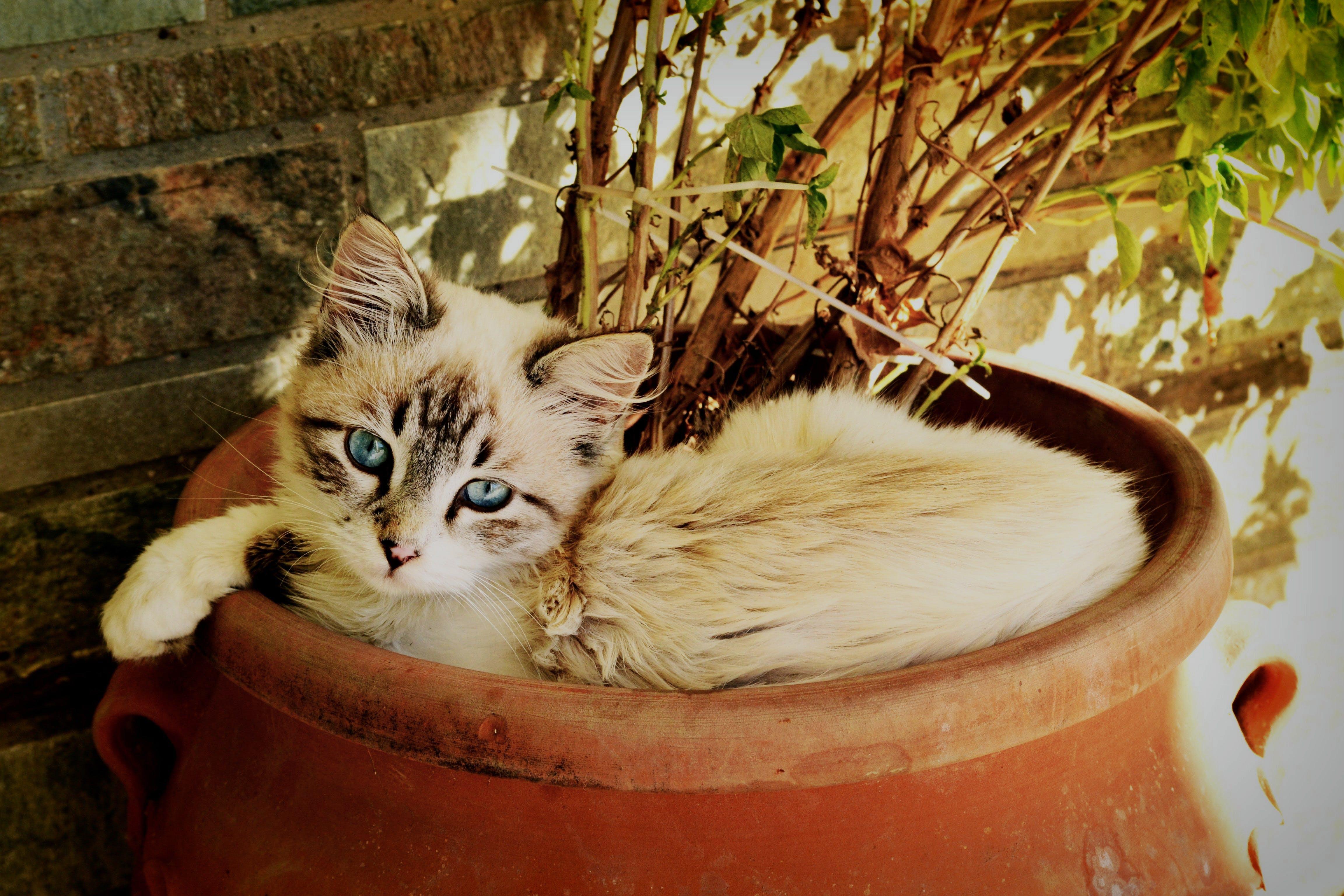bakmak, çok sevimli, evcil, Evcil Hayvan içeren Ücretsiz stok fotoğraf