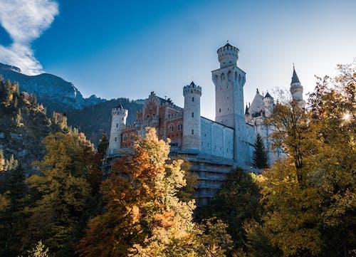 나무, 노이슈반슈타인성, 독일, 오래된 성의 무료 스톡 사진