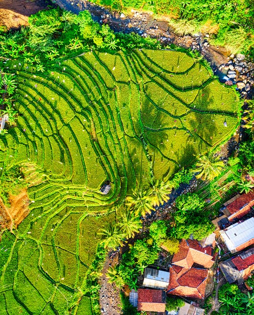 Top View Photography of Green Crop Field