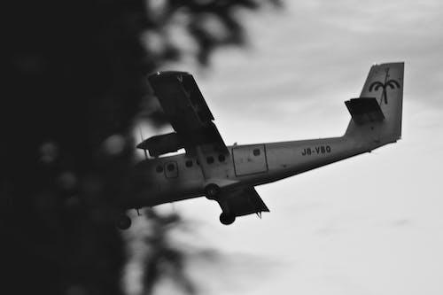 Foto d'estoc gratuïta de avió, blanc i negre, Carib