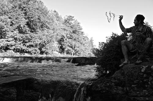 Foto d'estoc gratuïta de blanc i negre, cascada, falgueres, natura