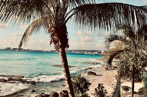 Foto d'estoc gratuïta de barbados, Carib, oceà blau, palmeres