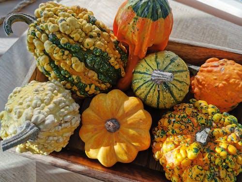 Ilmainen kuvapankkikuva tunnisteilla asetelma, Halloween, hedelmä, kasvaa