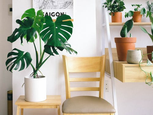 Photo of Swiss Cheese Plant Beside Chair