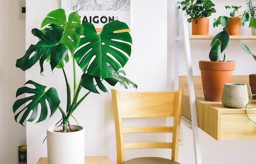 Foto d'estoc gratuïta de cadira, creixement, de fusta, disseny d'interiors