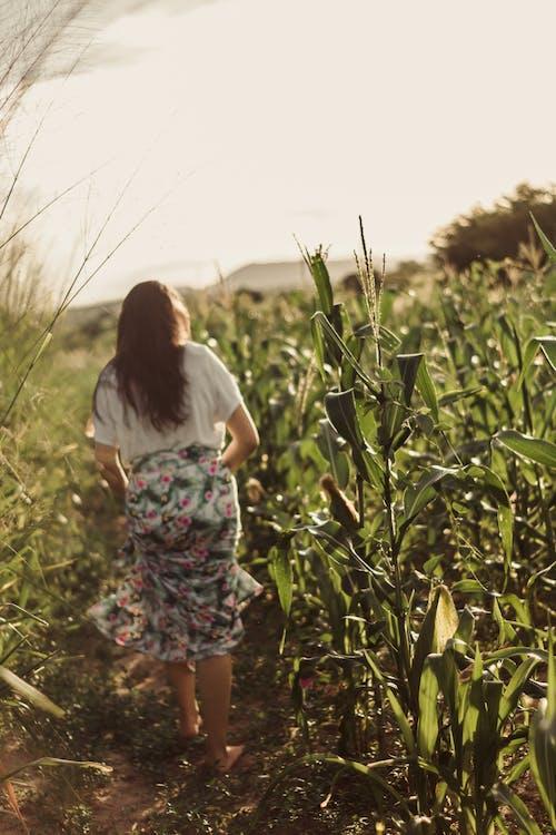 Foto d'estoc gratuïta de acampar, bellesa a la natura, caminar, granja