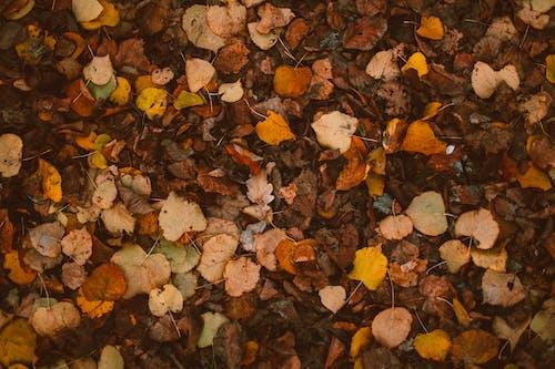 Foto Von Herbstlaub Auf Dem Boden