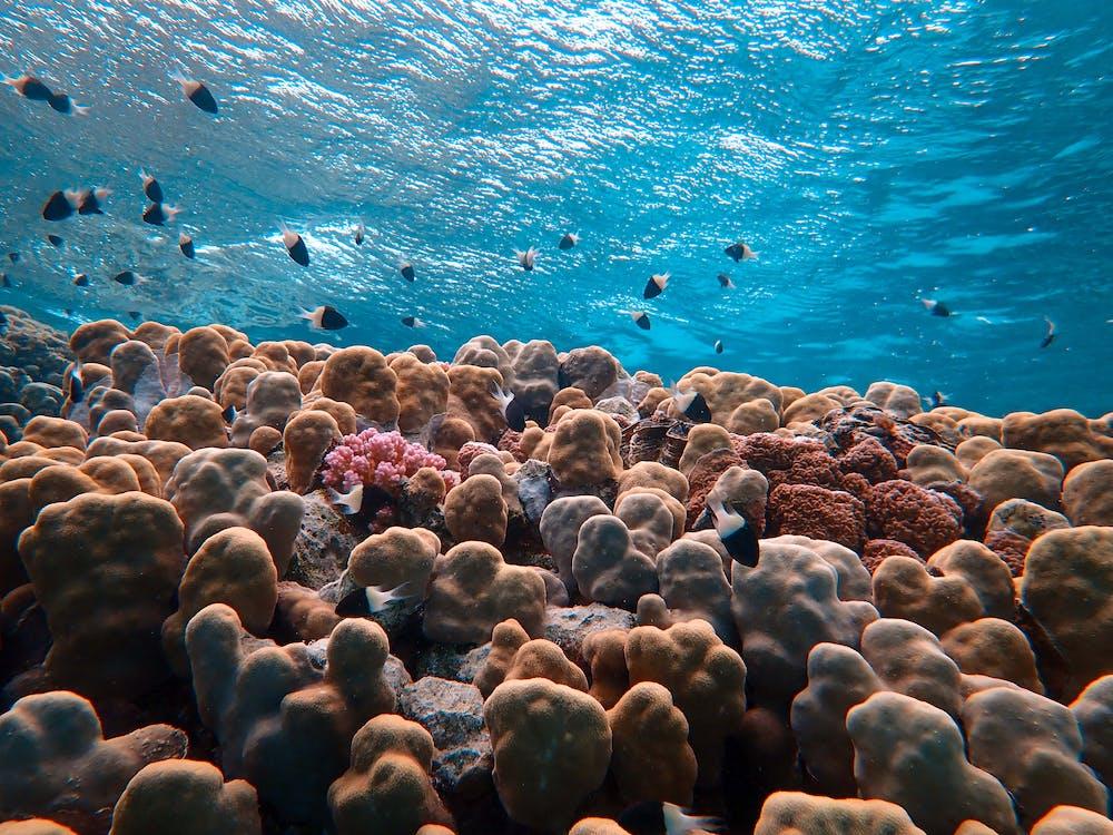 コーラル, サンゴ, シースケープ