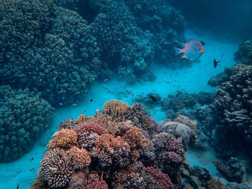 acqua, acquario, barriera corallina
