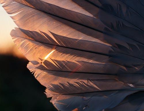 Free stock photo of art piece, artistic background, bird