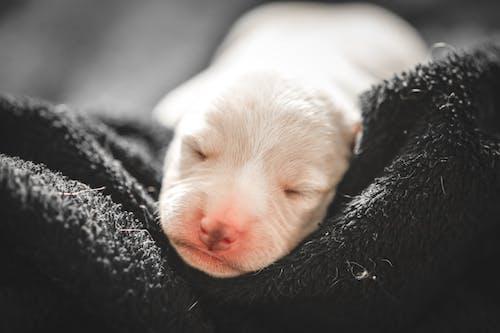Ảnh lưu trữ miễn phí về chó, con vật, cún yêu, đáng yêu