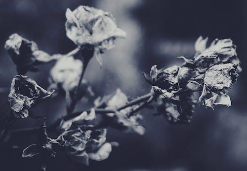 Photos gratuites de arrière-plan flou, art, automne, bourgeon