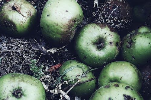 堆肥, 天性, 水果, 爛 的 免費圖庫相片