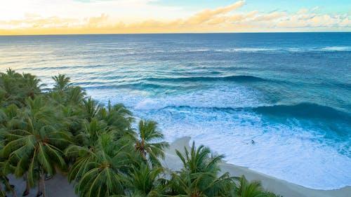印度洋, 岸邊, 度假村, 棕櫚樹 的 免费素材照片