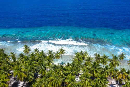 Ingyenes stockfotó fák, indiai-óceán, maldív-szigetek, óceán témában