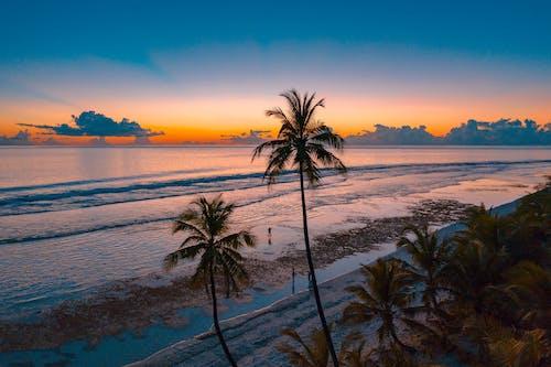 คลังภาพถ่ายฟรี ของ ชายทะเล, ชายหาด, ต้นปาล์ม, ตะวันลับฟ้า