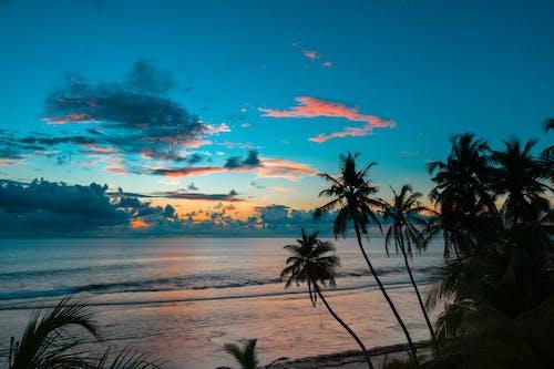 Бесплатное стоковое фото с закат, кокос, курорт, мальдивские острова