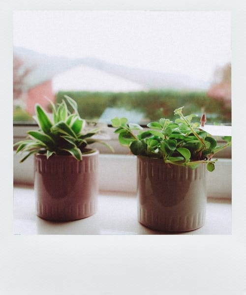 Photo of Two Potted Plants by Window Sill