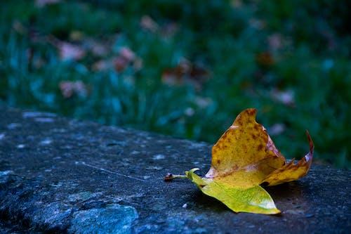 Fotos de stock gratuitas de amarillo, césped verde, fondo verde, foto macro