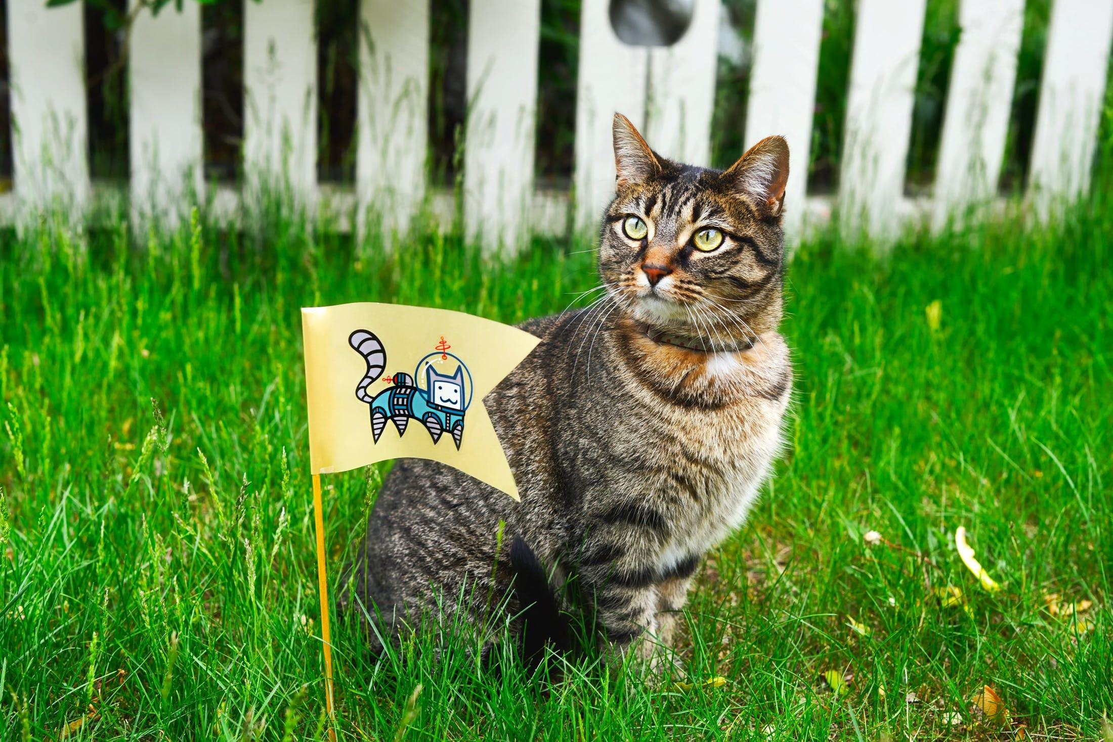 Free stock photo of animal, cat, cute, domestic