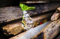 wood, plant, light bulb