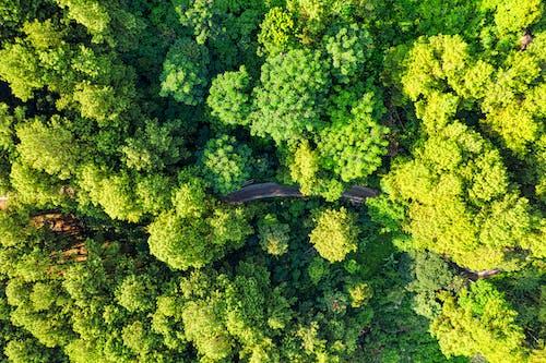 Immagine gratuita di alberi, botanico, colore, foresta