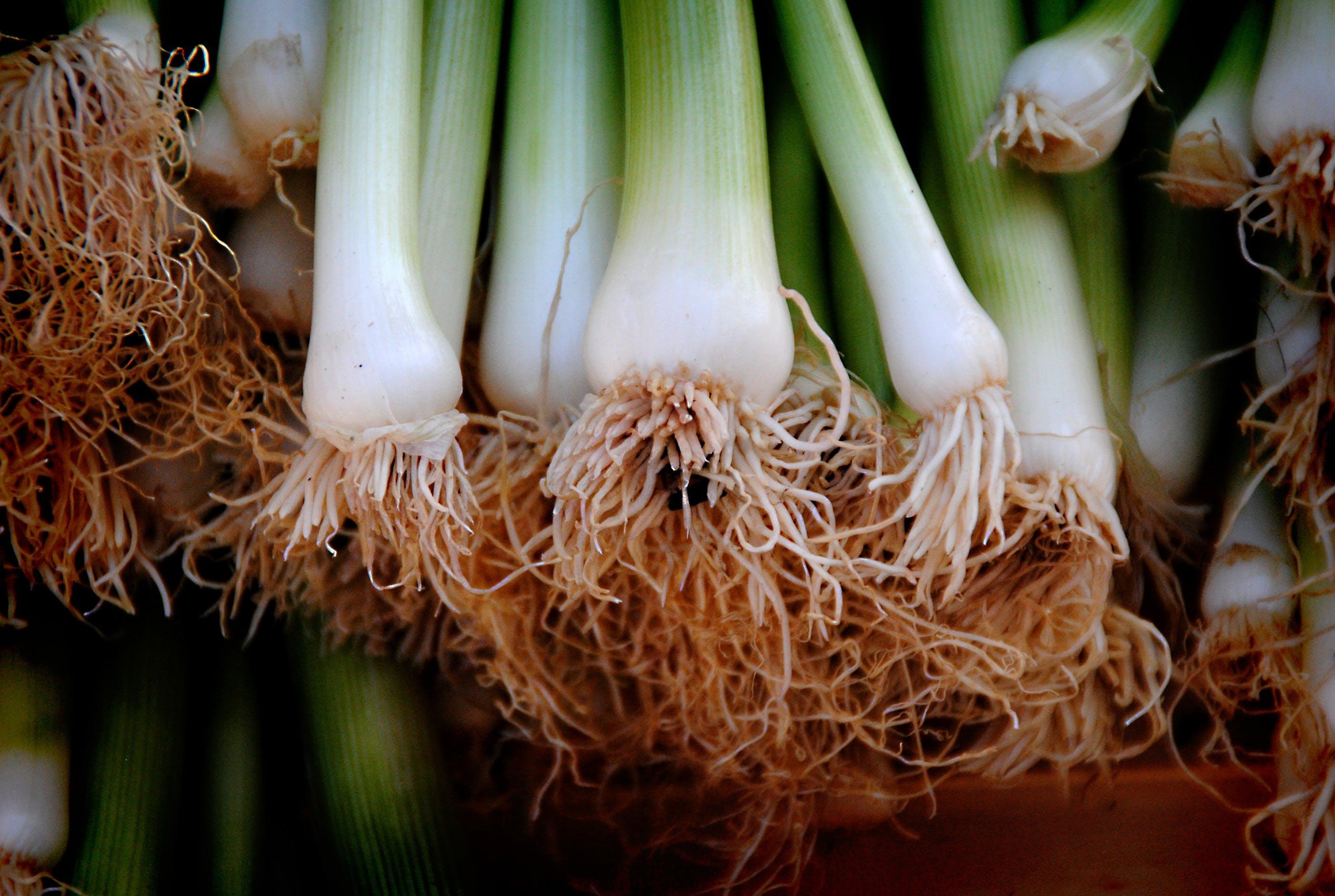 건강, 건강한, 녹색, 농장의 무료 스톡 사진