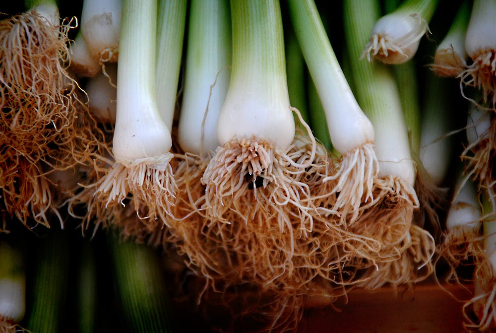 Spring Or Green Onions |The 10 Best Garden Spices You Need To Grow Now