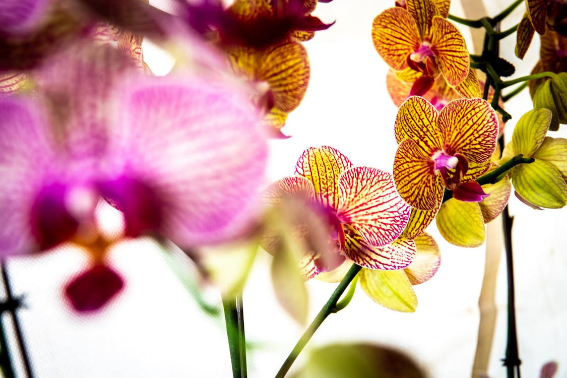 Selective Focus Photography of Orchids