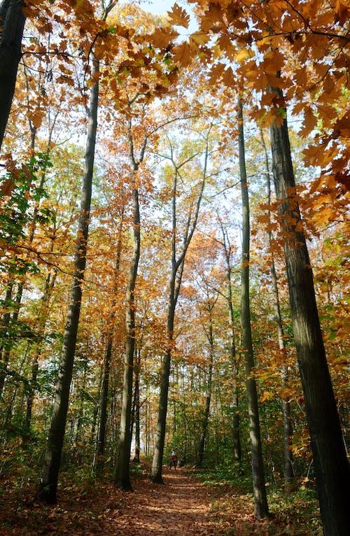 Darmowe zdjęcie z galerii z chodnik, drzewa, jesień, jesienne kolory