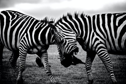 Foto profissional grátis de África, animais, bichos, jardim zoológico