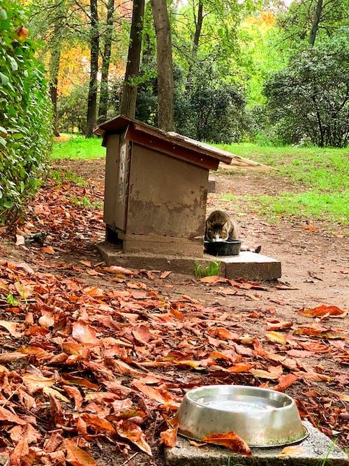 Безкоштовне стокове фото на тему «кішка, ліс, осіннє листя, Осінні кольори»