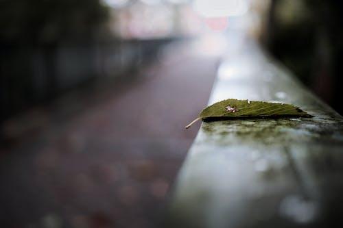 Ilmainen kuvapankkikuva tunnisteilla eläinpuisto, elämää luonnossa, kauneus luonnossa, lehtevä