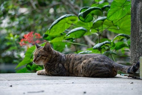 Tabby Cat on Wooden Floor
