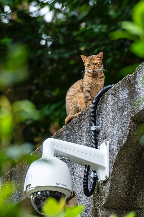 Selective Focus Photography of Cat Above White Security Camera